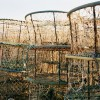 Lobster pots leica