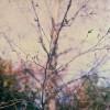 winter-1 smll copy